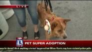 We sent Big Budah out to the Pet Super Adoption in Salt Lake City to see what kind of dogs...