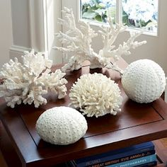 I have to have coral in my house!