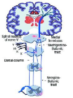 The patient with fibromyalgia has demonstrated gray matter loss, with one year of fibromyalgia pain equivalent to nine years of brain aging... REALLY great fibro article.
