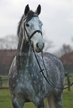 dapple grey horse   horse # jumping # i need this horse in my life #lingerie #gifts #forher #her #valentines #valentinesday #ladies #female #outfit #morning #ideas #dressingup #erotic #valentinegift