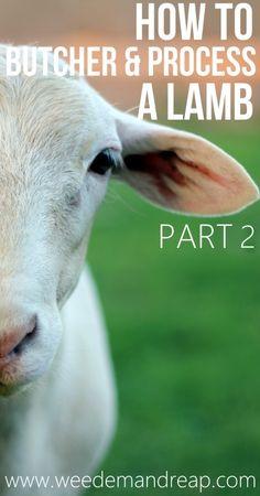 how to butcher + process a lamb - part 2