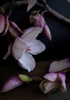 cold porcelain flowers Cold Porcelain Flowers, Magnolia, Plants, Flora, Plant, Planting