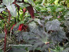 More texture... I adore foliage plants.  #Florida #garden