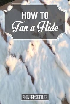 DIY Video Tutorial On How To Tan A Hide | Homesteading Skills and Ideas by Pioneer Settler at http://pioneersettler.com/tanning-hides/