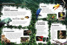 Livro regional de Geografia do Amazonas Ensino Fundamental Base Editora/Curitiba-PR