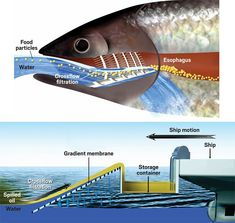 Simpler, faster oil-spill cleanup using fish-inspired membranes | Chemical & Engineering News