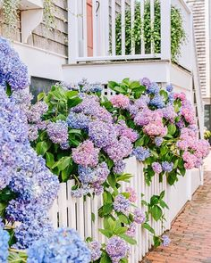 Country Living (@countrylivingmag) • Instagram photos and videos Town And Country, Country Living, Hydrangea Season, Seaside Garden, Style Me Pretty Living, Backyard Patio, Flower Power, Eye Candy, Beautiful Places