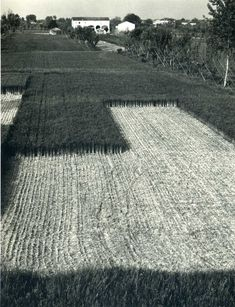 Paul Strand, Cut Grass, Luzzara, Italia, 1953. Learn Fine Art Photography - https://www.udemy.com/fine-art-photography/?couponCode=Pinterest10