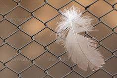 feather on a metal grid ...  background, bird, close-up, feather, hanging, mesh, metal, rusty, steel, texture