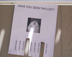 Tear-off poster - Have you seen this cat? Now you have!!!