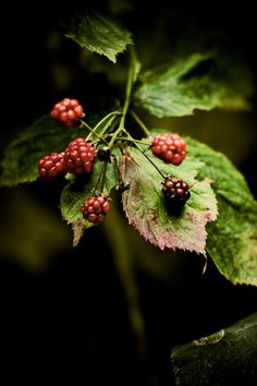 Love of my life - blackberries