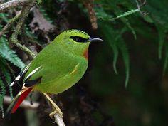 Maenam Wildlife Sanctuary - in Sikkim, India