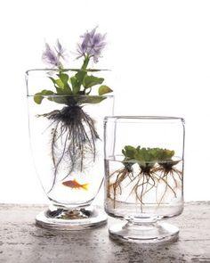 • Bocal à poisson et pot à fleurs •