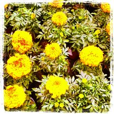 Flores é na Jardiland.