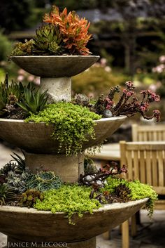 It's a succulent fountain! Succulents put on a great display in summer – check out the orange leaves of the Crassula on the top tier Succulents In Containers, Cacti And Succulents, Planting Succulents, Planting Flowers, Succulent Planters, Tower Garden, Garden Art, Garden Design, Plant Tower