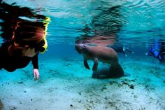 Virtual Swim with the Florida Manatees at Crystal River National Wildlife Refuge