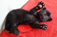 Этот прекрасный мир: Черный тигренок