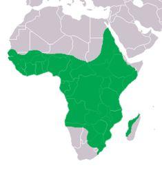 nílusi krokodil képek - Google-keresés Nile Crocodile, Location Map, African Animals, Crocs, Turtle, Dinosaur Stuffed Animal, Wildlife, Birds, Image