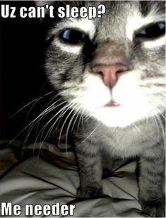 lol.  cats.
