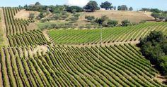 La vocazione del Molise nella produzione enoica appartiene a tempi remoti. Nel periodo pre-romanico i Pentri, popolazione sannita, conoscono l'arte della viticultura;  Plinio, in epoca romana, ha parole di elogio per i vini di Isernia,  tanto da ascriverli tra quelli ottimi d'Italia