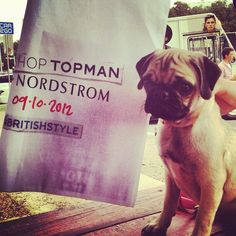 Sophie the pug approves of @Topshop's #BritishStyle