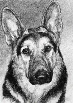 charcaol drawing of a German Shepherd