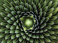 Tolles Bild. Natürlich, symmetrisch und mit einer schönen Variation der Farbe Grün.