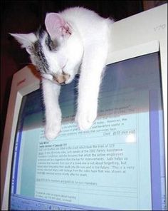 """This poor kitty """"Fell asleep on the job."""" From an awesome set of pictures most awkward cat sleeping positions. Kittens Cutest, Cats And Kittens, Cute Cats, Funny Cats, Funny Animals, Cute Animals, Siamese Cats, Animal Memes, Like A Cat"""