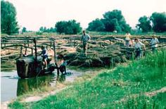 Hemp retting- Danube Swabians Were The Third Largest Producers Of Hemp In The World