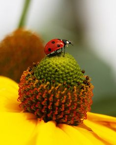 Insects are one of the most fascinating creatures on earth. There are more than 000 species of insects in the world. Insect Photography, Levitation Photography, Exposure Photography, Water Photography, Abstract Photography, Especie Animal, Fotografia Macro, Arte Disney, Mellow Yellow