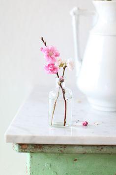 Spring blossoms & Vintage French Bottle