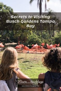 Secrets to Visiting Busch Gardens Tampa Bay - 2 Dads with Baggage