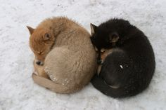 Lazy dogs by Jouko Ruuskanen on 500px