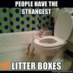 People have the strangest litter boxes!
