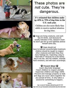 Teach Your Kiddos to be Dog Safe and Savvy! Dogs And Kids, Big Dogs, Animals For Kids, Cute Animal Memes, Cute Animal Videos, Cute Animals Puppies, Cute Baby Animals, Dog Safety, Dog Behavior