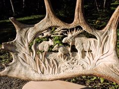 This Moose Antler Art Gallery by Samuel Côté, Age 20, is Jaw-Dropping