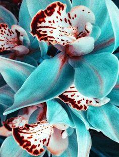 Çiçeklerin en güzeli, orkide..