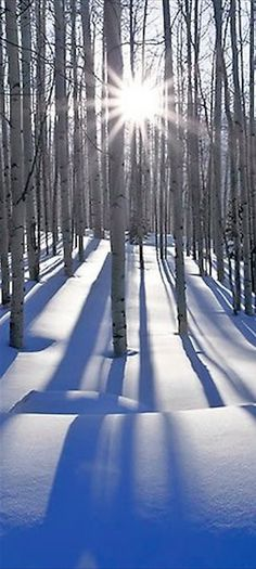 Sunlit birches in Telluride, Colorado • Peter Lik Fine Art Photography