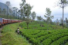 Zug nach Nuwara Eliya FR: Train pour Nuwara Eliya
