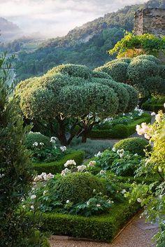 Carex: garden design by carolyn mullet!!! Bebe'!!! Love this formal garden!!!