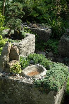 Genuine antique stone troughs bonsai trees in stone trough beside bamboo founn and lily pool in oriental style garden with stepping stones across stream large garden troughs square plain panel stone trough Garden Projects, Miniature Garden, Garden Paths, Outdoor Gardens, Landscaping With Rocks, Garden Inspiration, Garden Troughs, Garden Containers, Garden Stones