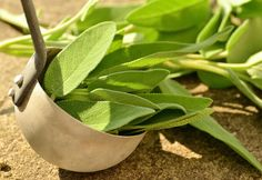 How to Get the Most Out of Your White Sage Essential Oil, plus 5 Blends – Essential Bazaar - Spiritual guidance - Botanical name: Salvia apiana Texture - Household Cleaning Tips, Cleaning Recipes, Cleaning Hacks, Cold Remedies, Natural Remedies, Holistic Remedies, Natural Treatments, Sage Essential Oil, Excessive Sweating