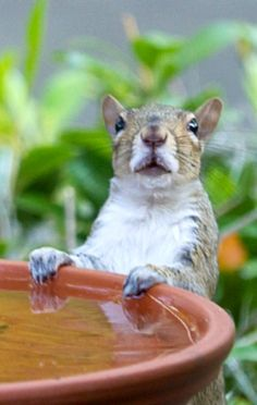 Thanks for the fresh water!  (**Feelin' Squirrely** group board)