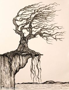 "Ink Drawing, ""Aged to Perfection"", wind blown tree poised on a cliff"