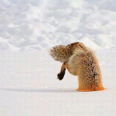 Ugh love u foxy