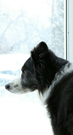 Waiting to play in the snow...patience!!