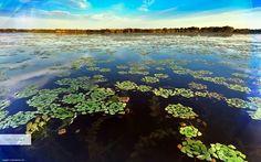 Danube delta biosphere reserve, Romania