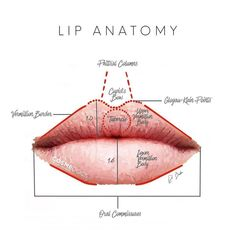 Do you know your lip anatomy? If not, study up! 👄👄
