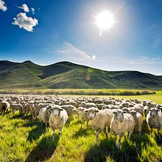 Top 100 culinary voyages in the West   Eat the best lamb of your life in Idaho   Sunset.com
