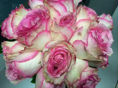 Garden Roses - Shirley's Flowers & Gifts, Inc., in Rogers, Ark. | Flickr - Photo Sharing!